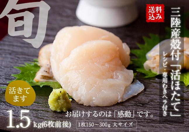 【送料込み】三陸産殻付活ホタテ 約1.5kg(目安として約10枚前後)帆立ナイフ・レシピ付