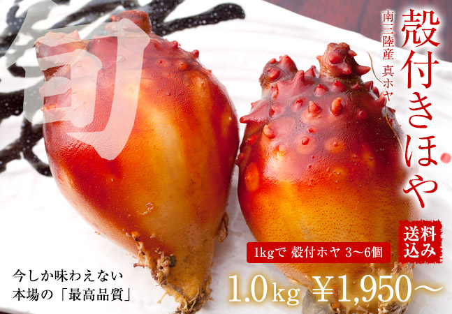 【送料込み】三陸産殻付 生ほや 1.0kg(約5個前後) ホヤの剥き方レシピ付